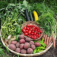 蓼科マリーローズ 野菜ファームの高原野菜